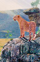 Masai Leopard painting