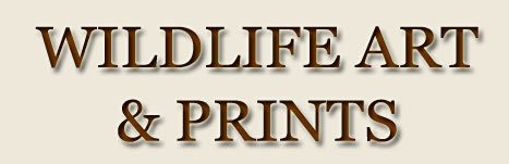 wildlife art and prints text logo